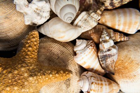 hardness: Set of shells piled in the foreground can symbolize different concepts like summer sea animals permanence hardness or strength decoration