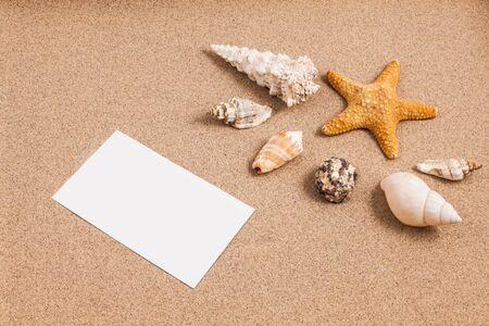 appoints: Shells on the sand with a low lighting Stock Photo