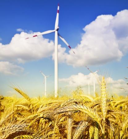warmness: cornfield and windmill
