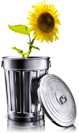 sunflower in trash bin photo
