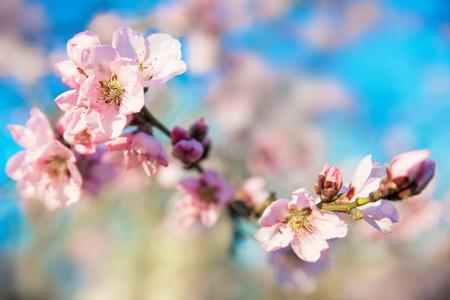 pink skies: Spring Stock Photo