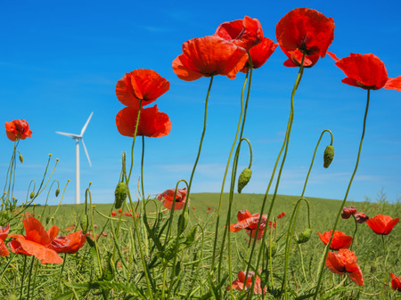 windfarms: poppy in front of a wind turbine Stock Photo