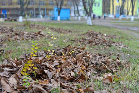 pile of leaves in the park