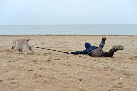 O cão puxa a criança por uma coleira na areia da praia e do oceano. Pet training na praia Foto de archivo - 94269643