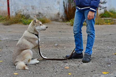the boy is training a Husky dog