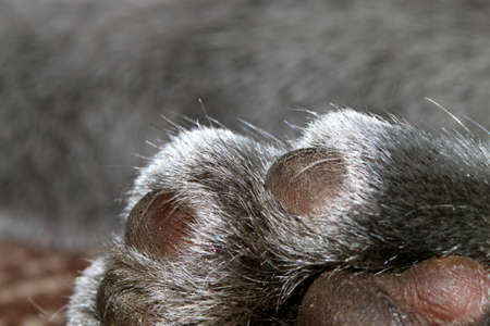 Different parts of a cats body close-up, close-up. Stock Photo