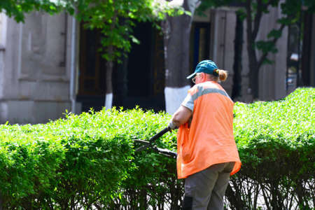 A woman shears a bush, a garden worker is engaged in landscaping.