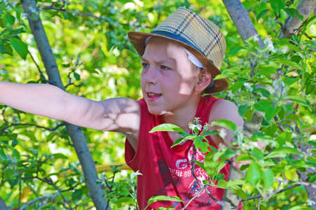 The boy climbed on an apple tree with a hat.