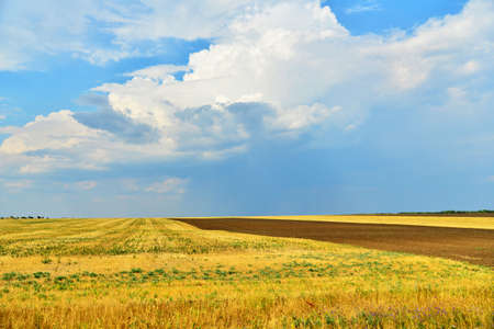 Yellow field with a rind on a background of the blue sky.