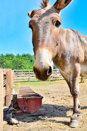 Photo of a donkey close up, wide-angle photo