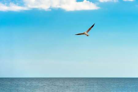 Seagull flying over sea water against a blue sky