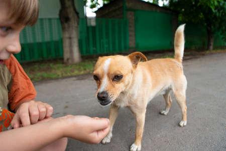 Un ragazzo abbraccia un cagnolino e la nutre con le sue braccia, concetto di amicizia e fiducia.