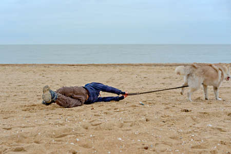 Husky dog pulls the boy by the belt and runs away from him, dragging the child along the sand on the seashore. Banque d'images
