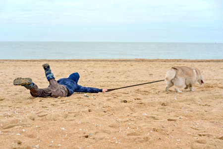 El perro husky tira al niño del cinturón y huye de él, arrastrando al niño por la arena de la orilla del mar.