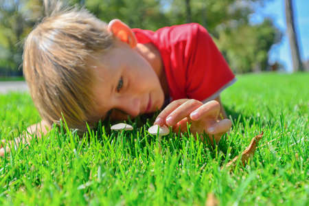 The boy lies on the green grass and looks at small porcini mushrooms.