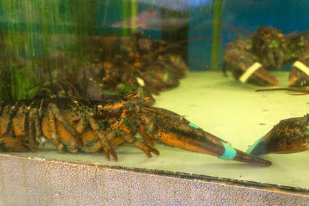 Crab in aquarium aquarium, seafood for sale in a supermarket.