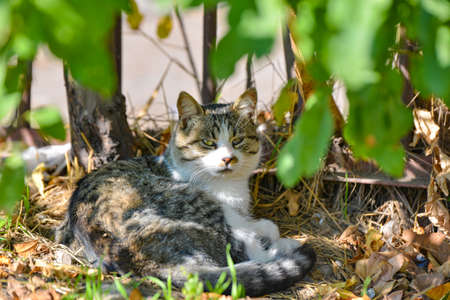 A gray cat lies in the shade of the sun in the bushes near the fence.