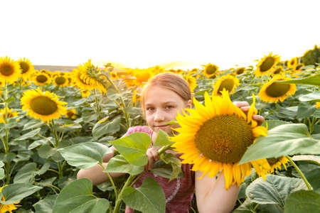 A girl among sunflowers in a field on a summer evening.