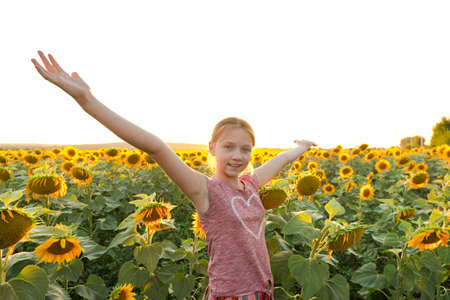 A girl in the evening in a field with sunflowers joyfully spreads her arms to the sides.