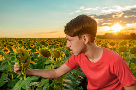 Angry boy looks at the angry sunflower among the field of sunflowers.