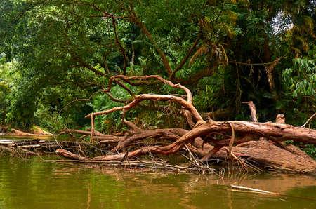 river Banco de Imagens