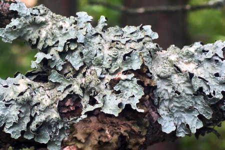lichen Stok Fotoğraf