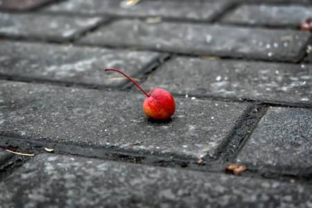 Cherry on a roadway Zdjęcie Seryjne - 98644863