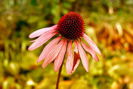 Healing flower on sunny day Stock Photo
