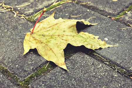 A yellow leaf on the pavement Stock Photo