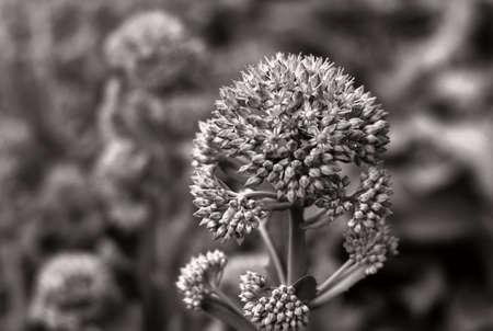 Plant in monochrome image