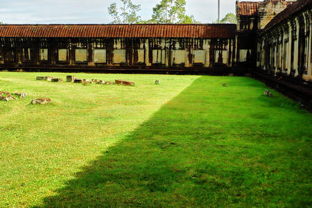 Green field of angkor wat Reklamní fotografie