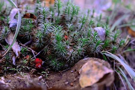 Forest grass with berries