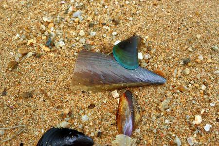 Shells on the sand Reklamní fotografie