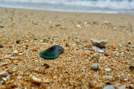 Seashells at the wave Reklamní fotografie