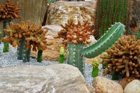 Cactus hat Reklamní fotografie