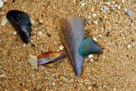 Seashells on the shore Reklamní fotografie