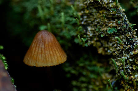 a small mushroom in the forest