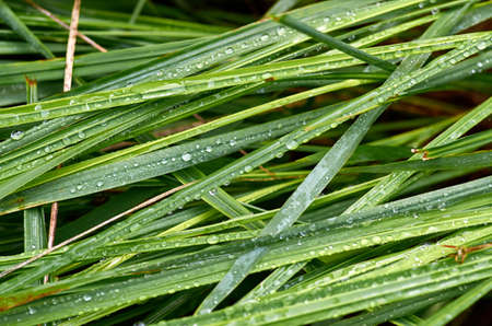 Dew on the grass Stockfoto