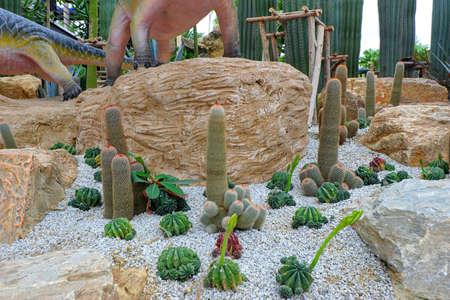 Cacti in the garden of asia Reklamní fotografie