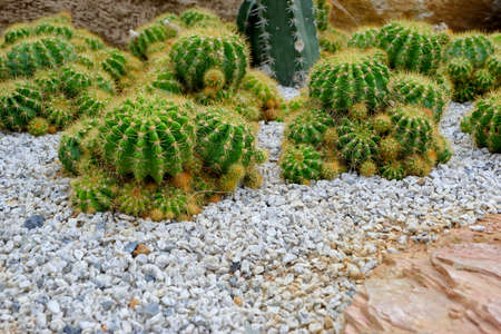 Cacti in the garden of asia Stockfoto