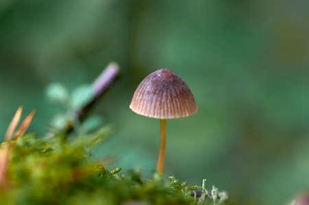 fungo nella foresta Archivio Fotografico