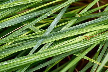 dew on grass Stockfoto