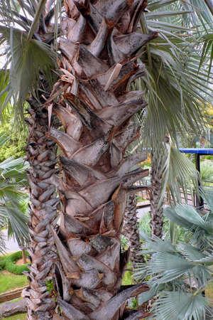 tree in thailand Reklamní fotografie