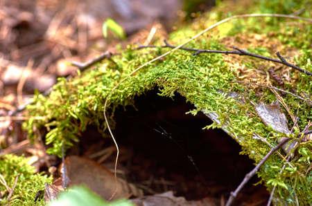 green moss on a tree Reklamní fotografie