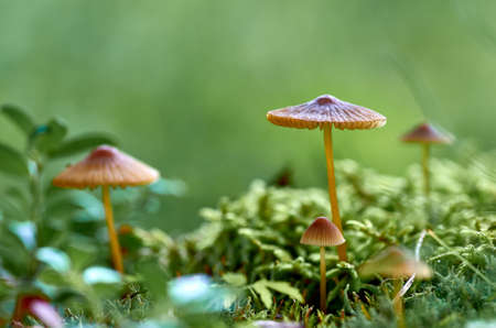 mushrooms and moss Stockfoto