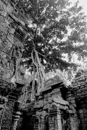 Ruins and tree with roots Reklamní fotografie