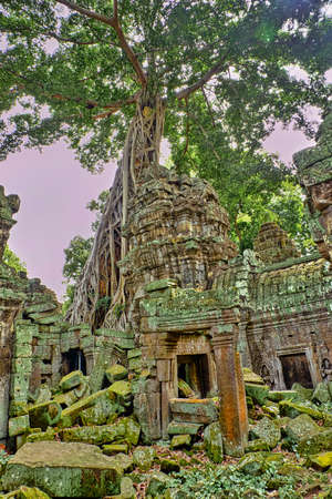 temple in Angkor Cambodia with a tree Reklamní fotografie