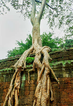 tree roots on the wall