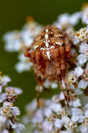 Spider on a flower Reklamní fotografie