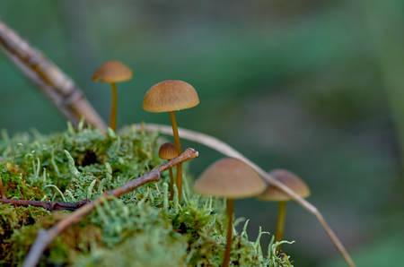 Group of small mushrooms
